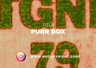 🎵 Purrple Cat – Purr Box ✅ #NoCopyrightZone /// 💲FREE TO MONETIZE!