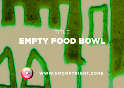 🎵 Purrple Cat – Empty Food Bowl ✅ #NoCopyrightZone /// 💲FREE TO MONETIZE!