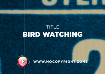 🎵 Purrple Cat – Bird Watching ✅ #NoCopyrightZone /// 💲FREE TO MONETIZE!
